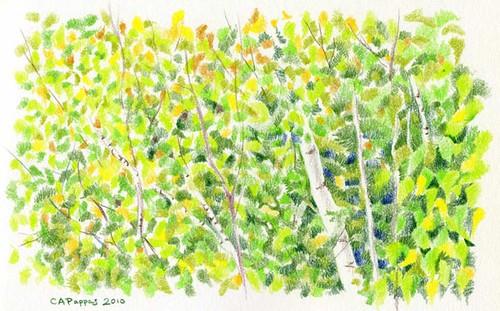 9-26-10, foliage