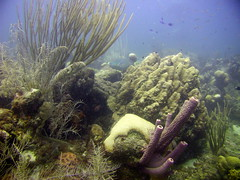 just a glimpse of some different corals (nvdzanden) Tags: curacao westpoint eastpoint divechartercuracao