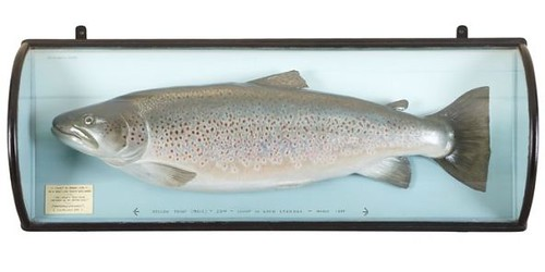 121 Year Old Trout
