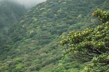 西部林道付近の見事な照葉樹帯
