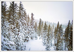 Dear Mammoth, I love you. (i ea sars) Tags: california trees winter usa naturaleza mountain snow 120 nature beautiful berg les forest canon landscape arbol is scenery arboles skiing hiver nieve natur lakes powershot sierra berge ixus trail bosque mammoth hora invierno mammothlakes northern montaa hwy395 eastern  zima priroda gry fjell montanas montagnes mammothmountain highway395 hory stromy    snih vuoret doublyniceshot sd940 ixus120is ixus120 sd940is canonpowershotsd940is