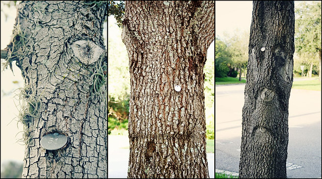 tree faces 3