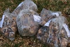 bulbs 092