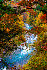 Autumn in Japan (deletio) Tags: blue autumn red green 20d yellow japan forest river okutama 2010 canonefs1785mmf456