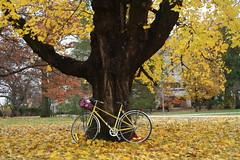 yellow (Simply Bike) Tags: autumn fall leaves bike yellow cycle peugeot vintagebike mixte yellowbike