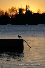 Sunrise with seagull (Alberto Rinaldi) Tags: sunrise helsinki seagull gull