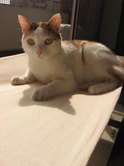 Tita (lagatamona) Tags: cats hamacas