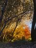 beautiful autumn (starrypix) Tags: autumn tree beutiful پاييز درخت zanjan نژاد mywinners قمري paeiz asadollah پائيز ghamarynezhad asadolah starrypix ghamarinezhad قمرينژاد
