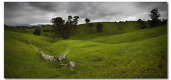 Green Green Grass of Home (danishpm) Tags: trees sky green grass canon dark pano australia wideangle nsw aussie aus 1020mm manfrotto murwillumbah sigmalens eos450d 450d tweedshire sorenmartensen hitechgradfilter 09ndsoftgrad