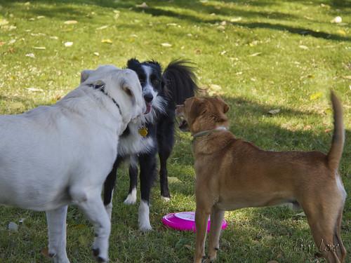 Rio San Gabriel Park Dog Park