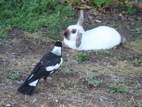Max and Minion