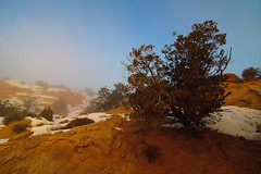 Canyonlands National Park, Utah, USA (Xindaan) Tags: morning blue schnee winter light sky orange usa cloud mist snow plant tree nature water rock fog clouds sunrise landscape geotagged outdoors dawn licht utah us ut flora nikon sandstone scenery wasser nebel unitedstates cloudy natur pflanze himmel wolke wolken tranquility wideangle tokina canyonlandsnationalpark moab dmmerung blau landschaft stein f8 11mm sonnenaufgang morgen sandstein baum tranquil juniper 2010 wolkig tranquilscene d300 gestein ultrawideangle 1116 beautyinnature nonurbanscene utahjuniper 1116mm tokinaatx116prodx tokina1116f28 atx116prodx tokina1116 1116mmf28 281116