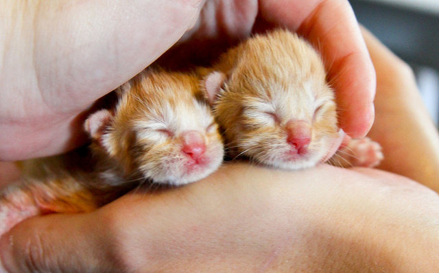 cute new born fosters