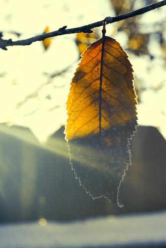 frozen leaf flare