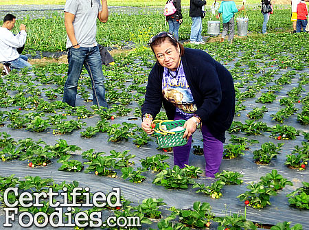 My mother picking strawberries herself for her Strawberry Sinigang - CertifiedFoodies.com