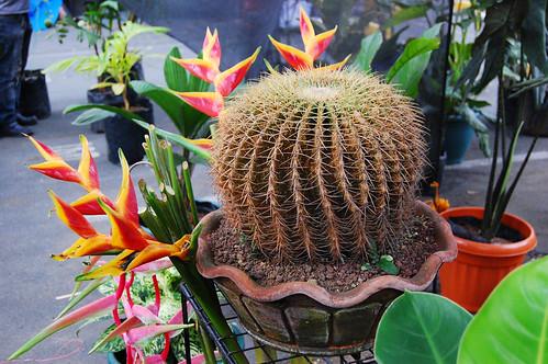 giant cactus2