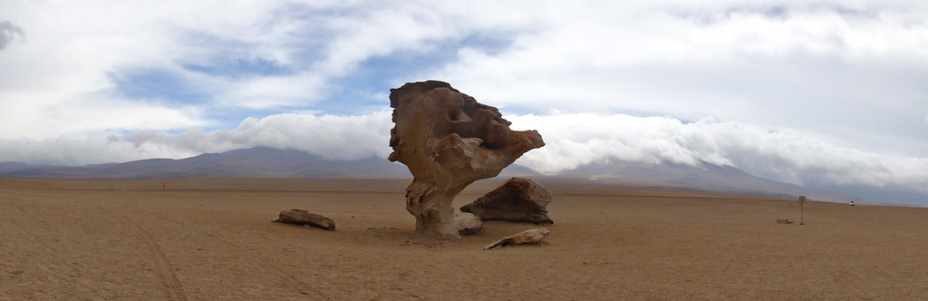Wind Shaped Rock Tree