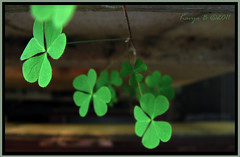 Three leaf clover(?).. hope to find a 4-leaf o...