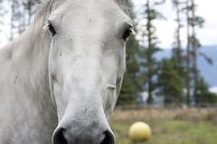 Horse (bwpcoax) Tags: horse britishcolumbia malcolmisland