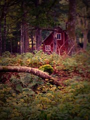 Sweden (Isabella K) Tags: forest sweden redhouse