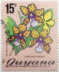 Guyana 15 cents Christmas Orchid