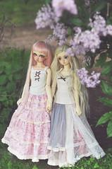 Rin and Miyove (T e s l a) Tags: volks f01 megu nana sd10 superdollfie foursisters bjd
