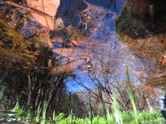 Deeper (andressolo) Tags: reflection reflections reflect reflected reflejos reflejo distortions distortion distorted nature leaves trees plants water stream pond agua