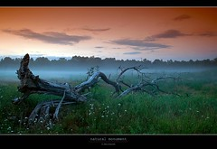 natural monument (D.Reichardt) Tags: sunset tree monument nature fog clouds germany landscape evening europe filter moorland skeletton cokin bokel