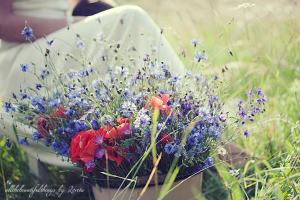 Cornflower ♥