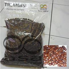 __Trembesi1000c (Ronyps) Tags: pohon bibit samaneasaman penghijauan lebbeck benihtrembesi kihujan