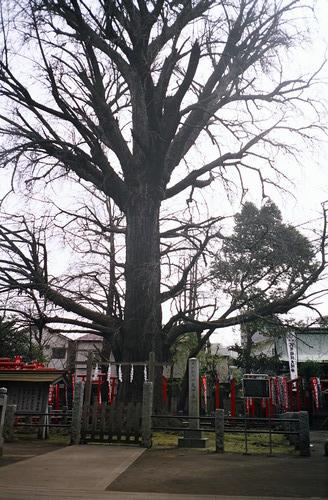 tokyo2009_film_86