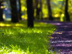 blink (~janne) Tags: park leica tree green nature grass bokeh olympus baum janne weg janusz ziob