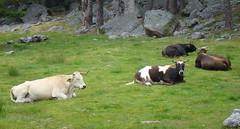 DSC08530 (Cyberian8) Tags: animal animaux diere soria lagunanegra  tier  castilla djur  castillalen castillaylen hayvan desanimaux  hewan haiwan  ivotinja