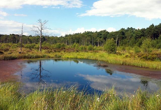 Chartly Moss, Staffordshire - A Shwingmoor Bog