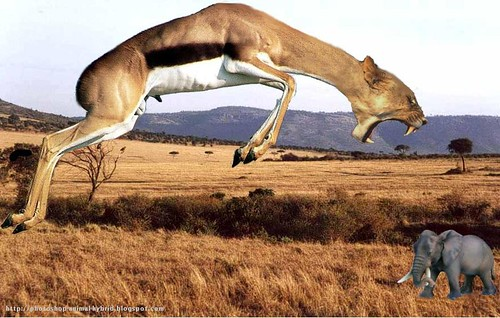 African new species,Photoshop animal hybrid,antelope,lion