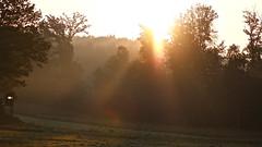 Morgenstund hat Gold im Mund. (j-verne) Tags: nature mushroom mushrooms gold nebel natur pilze wald sonnenaufgang morgenstund