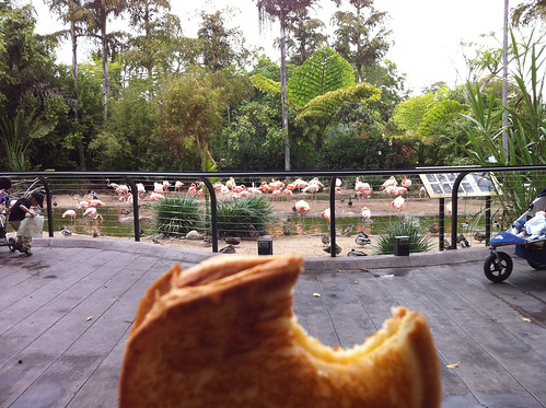 Brekkie with flamingos