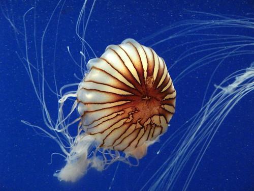 Georgia Aquarium 45