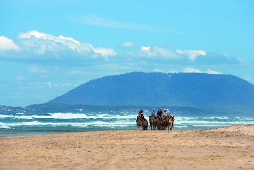 Lighthouse Beach Camel Rides