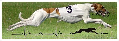 Rabapatona Windhund-Logo