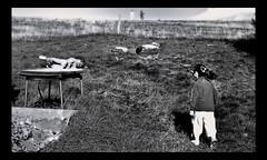 La joyeuse tribu !! (Jessie Romaneix ) Tags: famille blackandwhite bw love children fun outside dad child noiretblanc joy games nb jeunesse amour papa enfant joie antoine mouvement pre pleinair jeux negroyblanco labannedordanche childrenhood