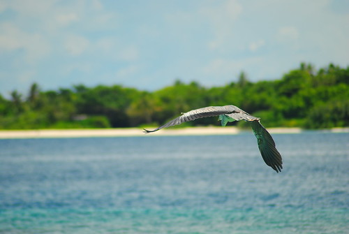 Baa-Atoll - Sonevafushi