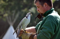 Falconer John and his falcon
