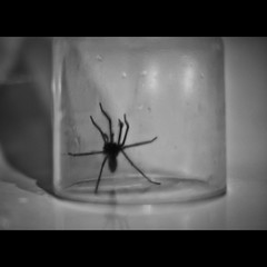 ARRRGHHH (andyathlon) Tags: morning white house black water glass 50mm spider bath sony f18 tumbler morriston a700 pirme swanea sonydt