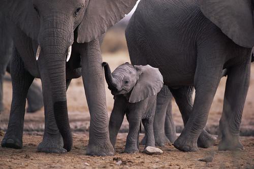 フリー写真素材, 動物, 哺乳類, 象・ゾウ, 家族・親子(動物),