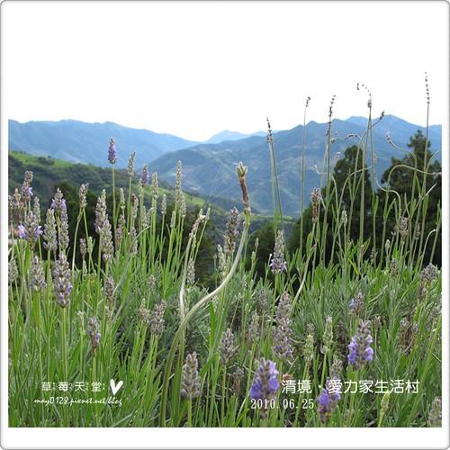 清境愛力家生活村119-2010.06.26