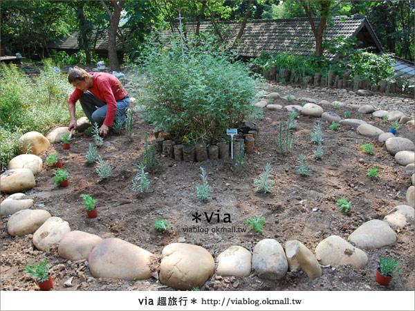 【彰化】彰化藝術高中~教室與森林結合的美麗校區20