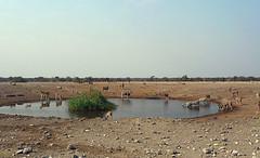 Churob Waterhole, Etosha