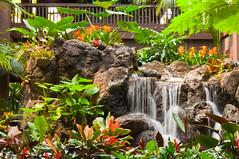 Tropical Oasis (CL Photographs) Tags: world nikon rainforest sigma lagoon disney bamboo resort oasis seven tropical waltdisneyworld walt seas polynesian ohana polynesianresort 18200mm d90 sigma18200mm sevenseaslagoon nikond90