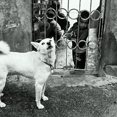 Darjeeling street dog (Olivier Th) Tags: voyage street trip travel summer vacation people blackandwhite bw dog chien india mountain playing game montagne canon children eos photo kid asia child shot image noiretblanc indian hill colonial reporter picture culture running nb british indians asie himalaya capture t hindu rue enfant darjeeling indien personne thao colony colline inde reportage jeu courant indiens colonie britannique jouer indienne  republicofindia journalisme coloniale digitalcameraclub jouant darjiling indiennes photoreportage bengaleoccidental courrant  photonoiretblanc bhrat ganarjya
